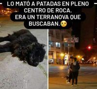 Mató a un perro a patadas porque se acercó a su mascota