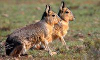 """""""Trataron de minimizar la situación, cazar especies autóctonas es un delito"""""""