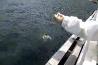 Tragedia en Lago Lácar: un joven de 28 años se ahoga ante la mirada de turistas y prefectos