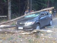 Turistas se salvaron de milagro: un árbol cayó sobre su vehículo