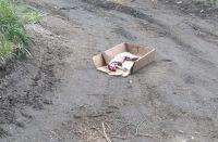 """Mataron a un gato montés, lo """"cuerearon"""" y lo dejaron tirado en el acceso a una laguna"""