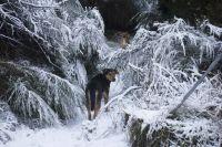 Advierten por nevadas en los Parques Nacionales Nahuel Huapi y Los Arrayanes