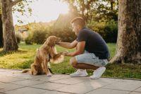 ¿Cuál es la mejor manera de actuar ante un perro que no conocemos?