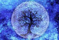 Horóscopo celta: Qué árbol sos según tu fecha de nacimiento