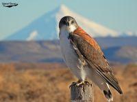 Comenzó la Semana de Observación de Aves en Invierno en Patagonia
